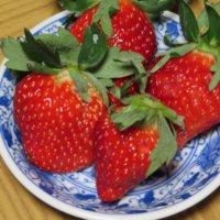 イチゴにわく虫|黒い虫の正体は?アブラムシやゾウムシの虫除け方法は?の画像