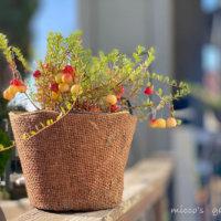 美しく色づいたベリー系果樹にうっとり🍓!「実りの一枚」特集♪の画像