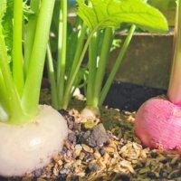 10月に種まき&苗植えしたい家庭菜園におすすめの野菜8選の画像