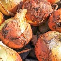 11月に種まき&苗植えしたい家庭菜園におすすめの野菜8選の画像