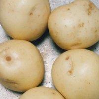ジャガイモの後作におすすめの野菜は?サツマイモはNGって本当?の画像