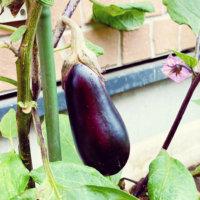 2月に種まき&苗植えしたい家庭菜園におすすめの野菜8選の画像