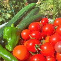 3月に種まき&苗植えしたい家庭菜園におすすめの野菜6選の画像
