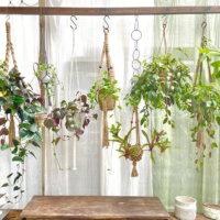吊るして楽しむ植物で空間にグリーンを✨インテリアハンギング特集🌿の画像