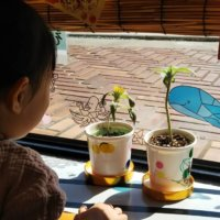 【GreenSnap for Kids】保育園プロジェクト便り*第3回*先生アンケートレポートの画像