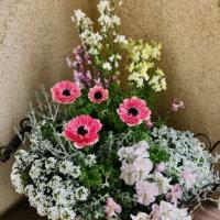アネモネの寄せ植えで相性のいい草花8選!おしゃれにするコツもご紹介!の画像