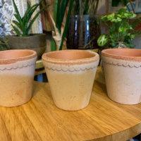 素焼き鉢は通気性がよく万能!植え付けにおすすめの植物は?の画像