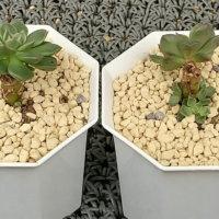 プラスチック鉢は通気性に注意!デメリットを知って相性のいい植物を植えよう。の画像