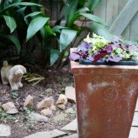 おしゃれなテラコッタ鉢で園芸を楽しもう!素焼き鉢との違いや特徴は?の画像