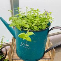 植木鉢の種類|基本の選び方や鉢と相性の良い植物は?の画像