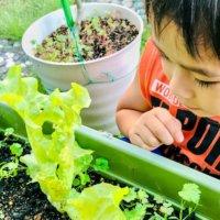 GreenSnap For Kids Project ~2021年10月キッズ便り~の画像
