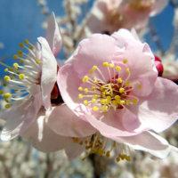 1月の花おすすめ12選!厳しい寒さでも咲く種類は?花壇やプランターで楽しめるのは?の画像