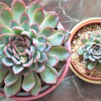 株分けとは|やり方や管理方法、どんな植物でできる?の画像